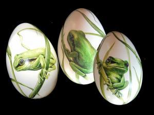 15. Frosch
