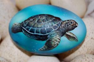 19 Schildkröte