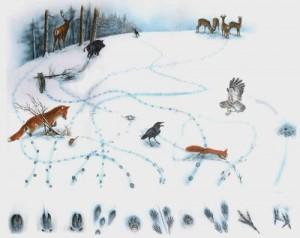 7. Spuren im Schnee
