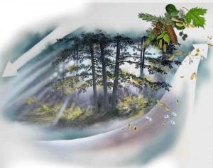 5.Samenverbreitung  durch Wind