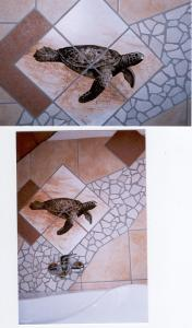 Schidkröte