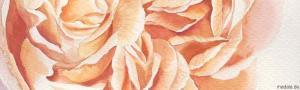rose aqurell